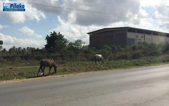 cavalo01